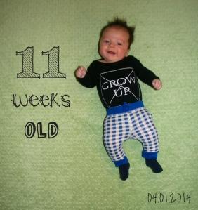 11weeksH